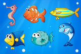 Colorful sea creatures