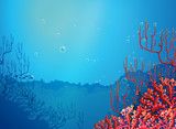 Beautiful corals under the sea