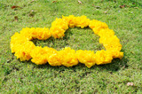 Yellow Cotton tree flower in heart shape on green grass backgrou