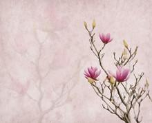 Fleurs de magnolia rose sur le vieux fond de papier