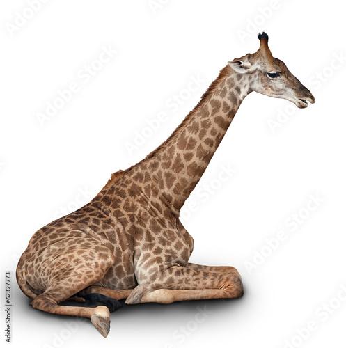 In de dag Giraffe the young giraffe