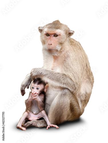 Foto op Canvas Aap Two monkeys