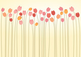 Horizontal Layer of Tulips