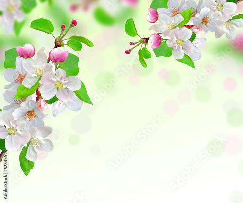 In de dag Bloemen spring blossom on nature background