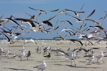 Group of Seabirds Taking Off