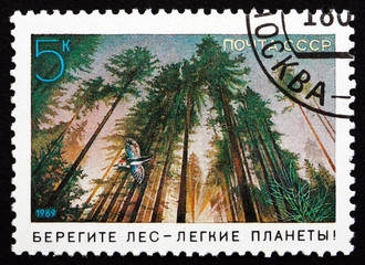Postage stamp Russia 1989 Forest, Environmental Protection