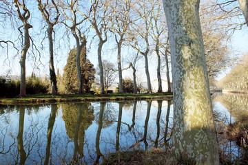 Canal du Midi, Lauragais, platanes