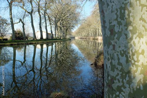 Foto op Canvas Kanaal Canal du Midi, Lauragais, platanes