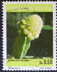 Stamp printed in the Bolivia, shows photo of Cactus flowers