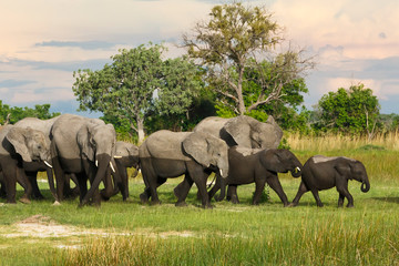 Elefantenherde von Afrika