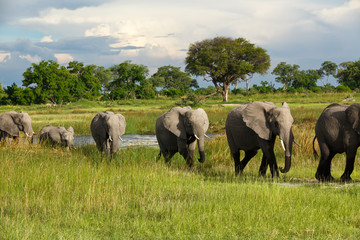 Elefantenkolonne in Afrika