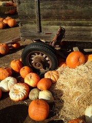 Pumpkins, hay bales and old wagon in rustic setting.