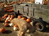 Pumpkin, Hay Bales and Old Wagon in Pumpkin Patch