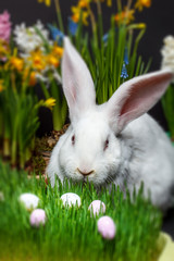 Rabbit in the grass