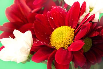 deep red flower close up