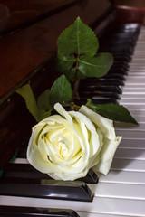 Белая роза на клавишах фортепиано