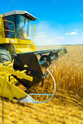an yellow  combine harvester in work on wheat field