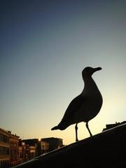 Venice, seagull silhouette