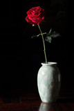 Single red rose isolated on black.