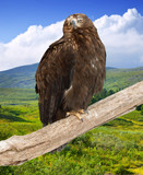 eagle on on wood trunk