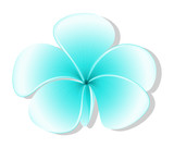A light blue flower