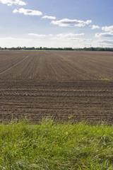 Unbestellte Felder, unworked fields