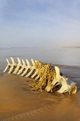squelette de cétacé pris dans un filet de pêche