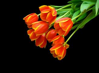 orange tulips on a black background