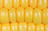 Photo of yellow corn background, abstract backgrounds,