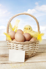 Easter basket with baby chicken and eggs