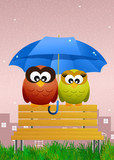 owls with umbrella
