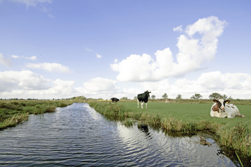 Typical wide dutch landscape with meadows, water and cloudscapes