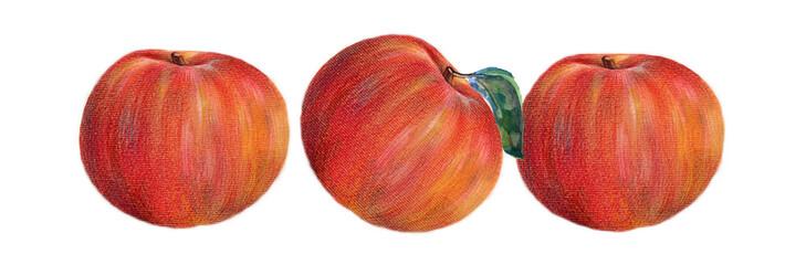 apple, fruit, leaf, red, green, watercolor