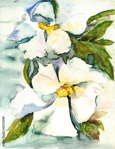 White flowers © Heidrun Gellrich