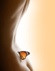 back and butterfly - delicate concept