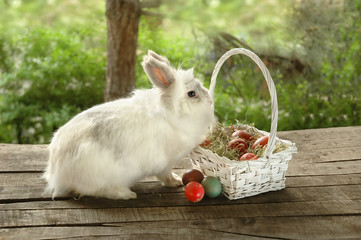 Rabbit near basket with Easter eggs