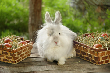 Rabbit between baskets full with Easter eggs on wooden table