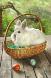 White bunny in basket with Easter eggs in front