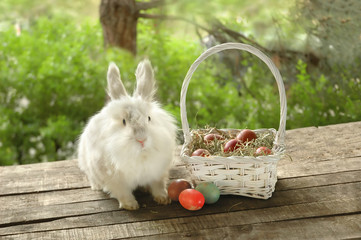 White bunny near basket with Easter eggs on wooden background