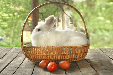 White bunny in basket with three red Easter eggs