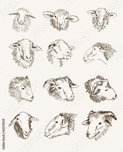 head of farm animals