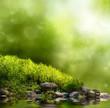 Obrazy na płótnie, fototapety, zdjęcia, fotoobrazy drukowane : Grüne Natur als Hintergrund