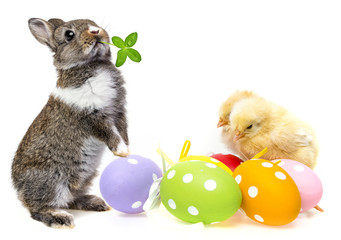 easter eggs and chickens and rabbit