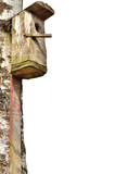 Wooden starling bird house, large birch tree trunk, isolated