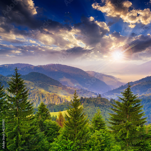 pine trees near valley in mountains and forest on hillside under