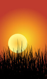 Grass And Sunset Background