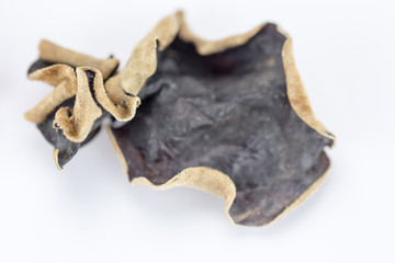 Pilze getrocknet