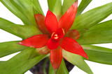 Beautiful red flower in a pot