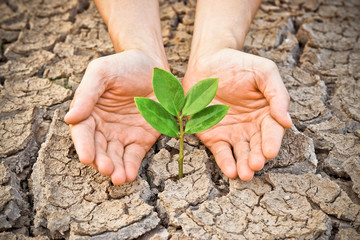 hands holding tree growing on cracked earth
