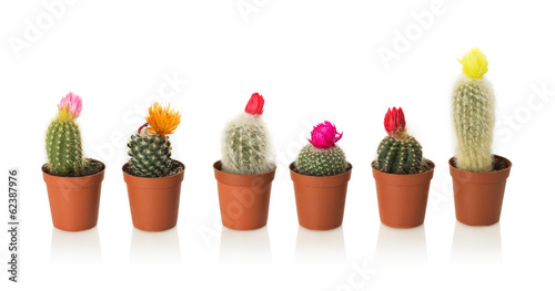 Staande foto Cactus Collection of cactuses in a pot on white background